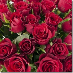 A closeup of a bouquet of red roses; Shutterstock ID 95558536; PO: redownload
