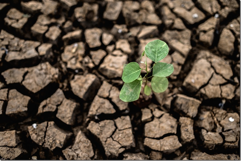 Trees grown in dry, cracked, dry soil in the dry season,global warming